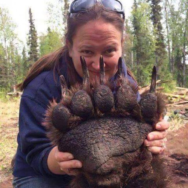 Seorang wanita yang mengangkat kaki beruang yang sedang tidur.