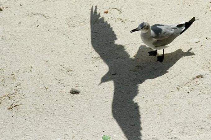 Aneh memang, tapi burung yang sedang diam ini memang menghasilkan bayangan seperti sedang mengepakkan sayapnya.