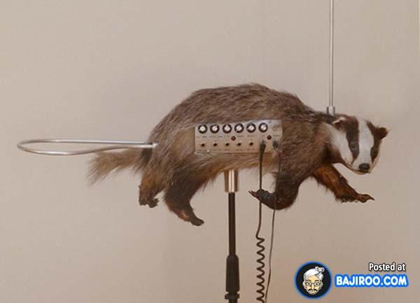Sekarang suara hewan bisa jadi instrumen musik lho dengan dibantu alat super canggih.