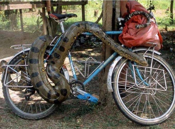Hayoo. Siapa berani nyuri kalau yang jagain sepedanya kayak gini?.