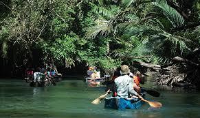 Kamu bisa menikmati indahnya tumbuhan dan satwa di ujung kulon dengan menyusuri sungai Cigenter.