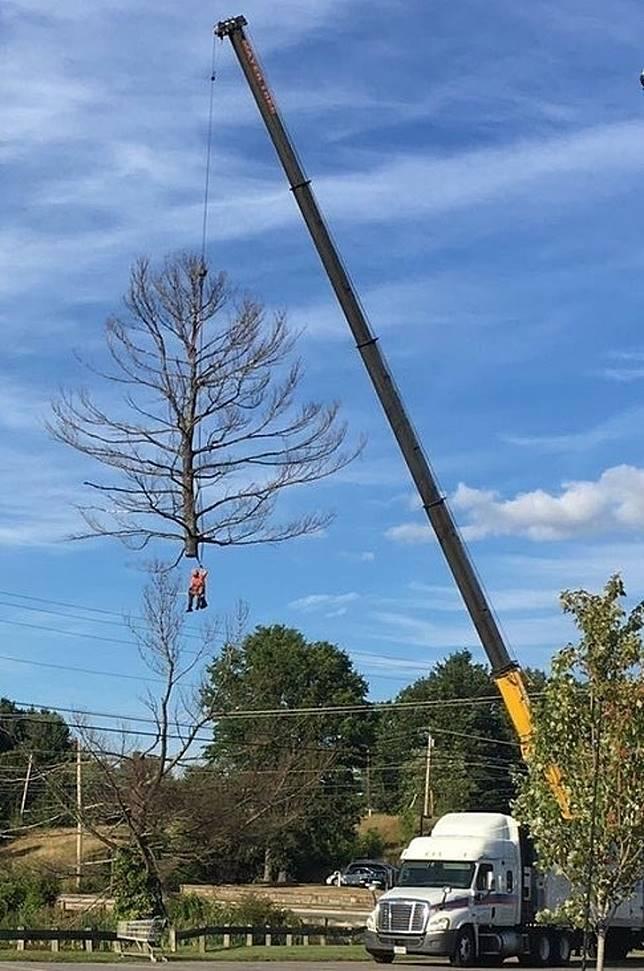 Bagaimana orang yang ikut menebang pohon malah terangkat katrol.