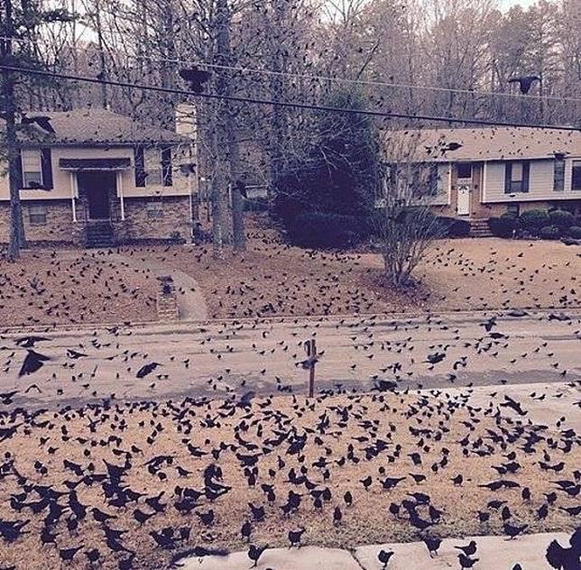 Entah datang darimana, ribuan burung ini memenuhi sebuah komplek perumahan.