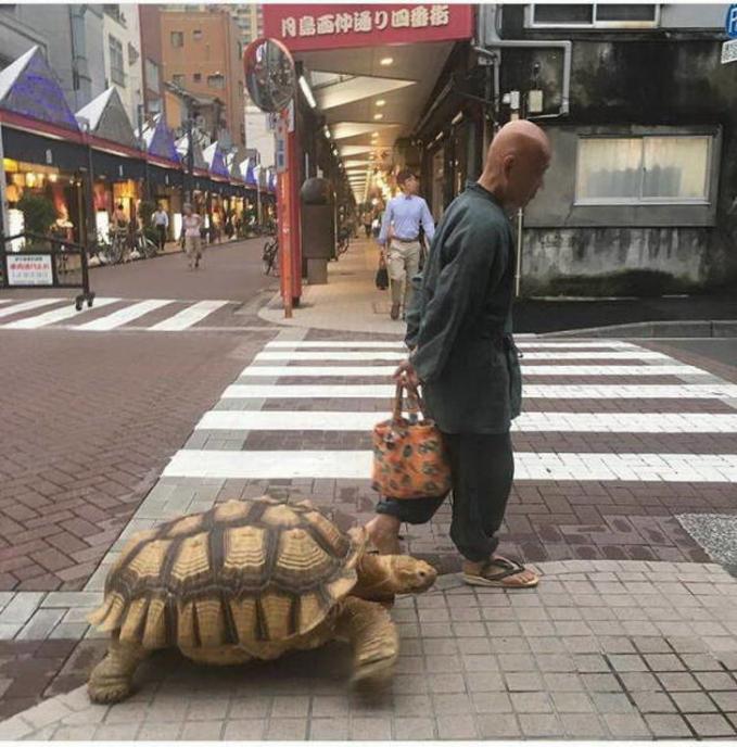 Jalan-jalan sama anjing mah udah biasa. Pria ini dong jalan-jalan dengan kura-kuranya.