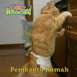Inilah Pekerjaan yang Cocok untuk Kucing Seandainya Punya Kemampuan Lebih