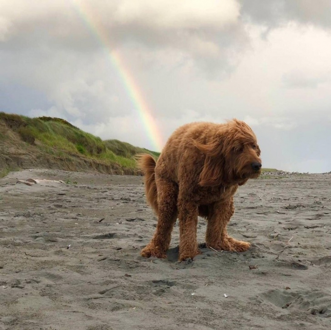 Seolah-olah anjingnya punya kekuatan super yang mampu mengeluarkan pelangi lewat bagian belakang tubuhnya.