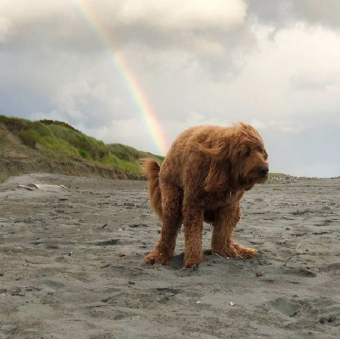 Anjing ini bisa ngeluarin kentut pelangi !