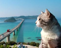 Fotogenic! Kucing ini Selalu Pas Gayanya Saat di Depan Kamera Bikin Kepengen Meluk