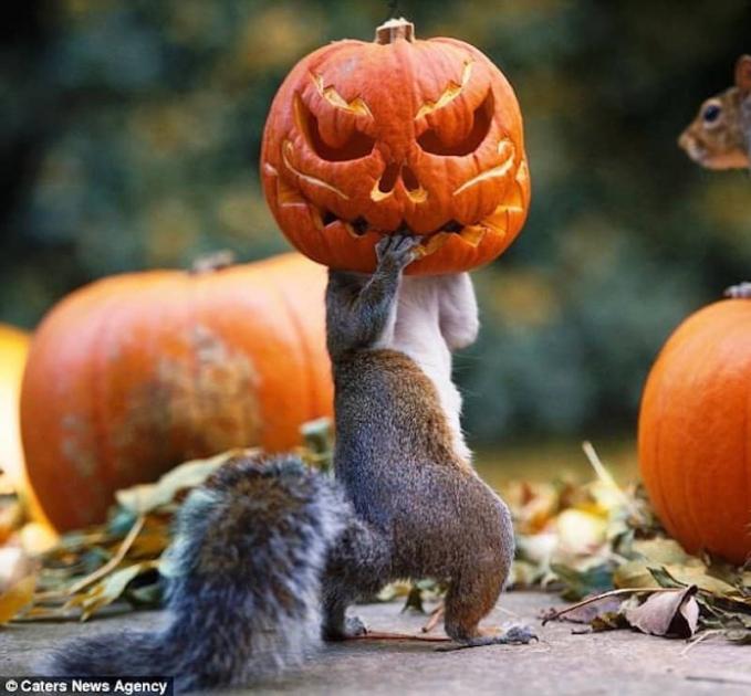 Pergi ke acara Halloween dulu ah sob sesekali. Tuh, ternyata nggak hanya manusia saja ya yang bisa apes karena ulahnya sendiri tapi hewan juga Pulsker.