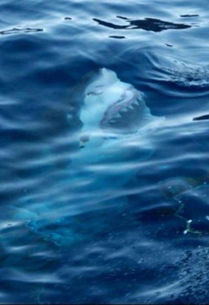 Lagi enak-enak naik perahu ditengah laut tiba-tiba dari bawah ada sosok lagi nyengir gini sob.