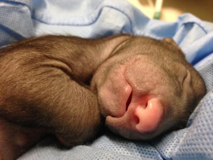 Hmm, sepertinya anak beruangnya lagi mimpi indah ya Pulsker.