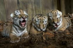Foto-Foto Menggemaskan Bayi Hewan, Jadi Pengen Nyubit Deh!