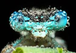 Kumpulan Foto Menakjubkan Serangga Terkena Tetesan Embun Dilihat dari Dekat