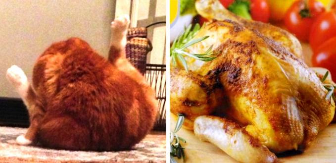 Liat deh, aksi kucingnya kalau dilihat sekilas mirip dengan ayam goreng siap makan guys.