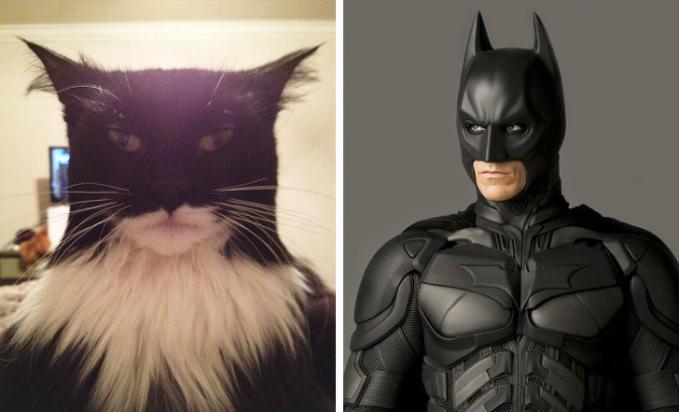 Kali ini si kucing mencoba menyerupai sosok superhero BatMan.