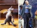 Tingkah Lucu Kucing yang Mirip dengan Benda dan Sosok Sekitar Kita