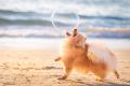 Kontes Foto Anjing Terbaik 2018 Sudah Diumumkan, Inilah Beberapa Foto Epiknya