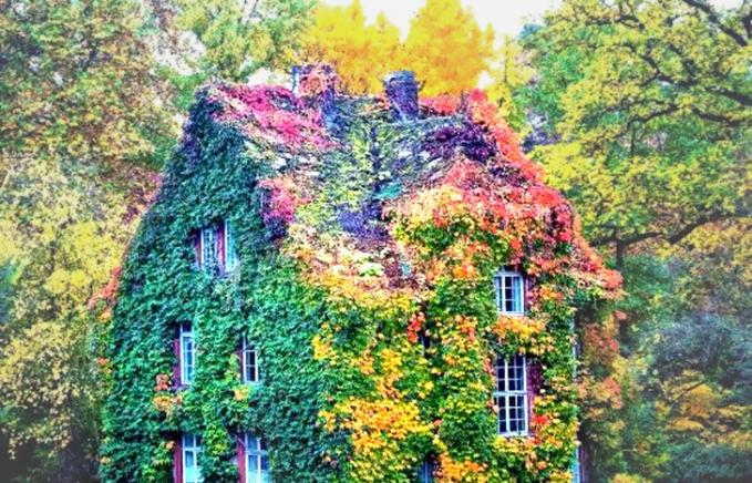 Gradasi warna tanamannya menghasilkan pemandangan menakjubkan. Rumah hijau ini berada di Giessen, Jerman.