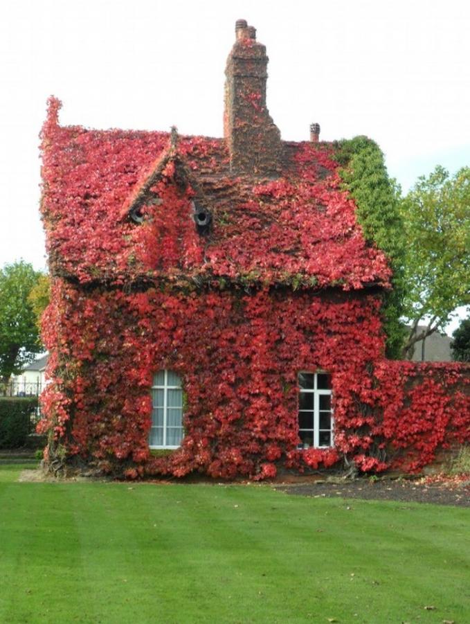 Sebuah cotage di Sandwell, Inggris dipenuhi dengan tanaman berwarna merah.
