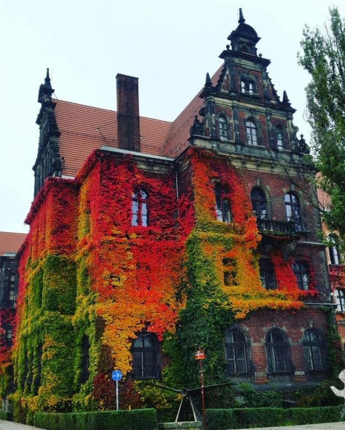 Tak selamanya museum membosankan Pulsker, museum di Wroclaw, Polandia ini contohnya yang dihiasi bunga di bagian dinding depannya.