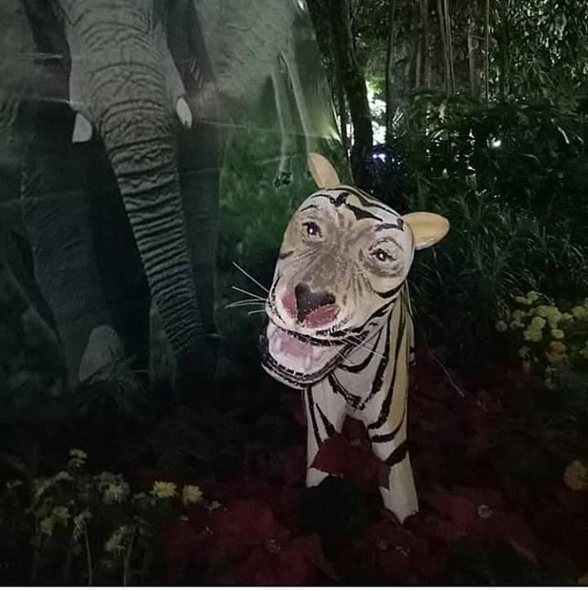 Jangan diem aja, itu disenyumin sama macan.