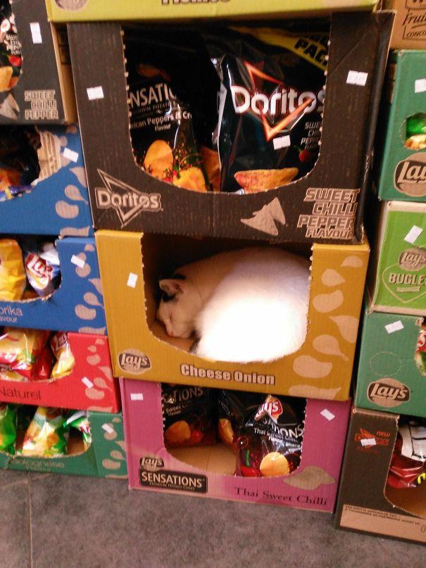 Nggak peduli dimanapun berada sekalipun di tempat perbelanjaan, si kucing tetap tertidur nyenyak sob.