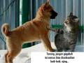 Penyayang Anjing Dan Kucing Pasti Histeris Melihat 6 Meme Ini. Bikin Ketawa Sampe Lupa Mingkem