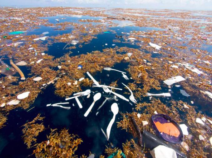 Ini adalah salah satu wilayah yang sangat tercemar di Karibia.