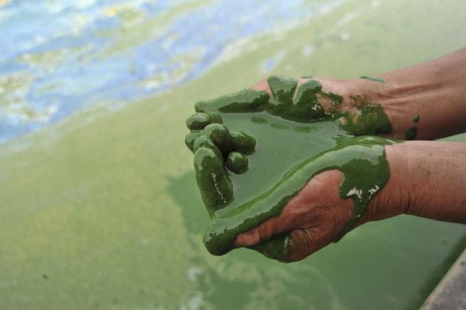 Ini adalah foto di mana seorang nelayan mengambil segenggam dengan air yang tercemar di Danau Chohu, Cina.