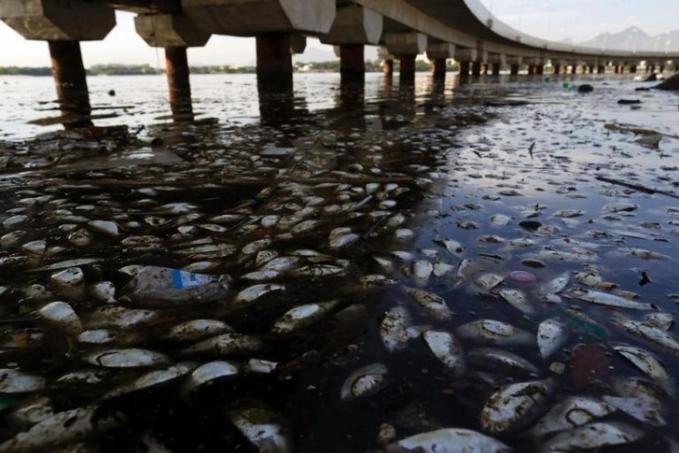 Karena air yang tercemar, ikan di Teluk Guanabara, Rio de Janiero semuanya mati mengambang.