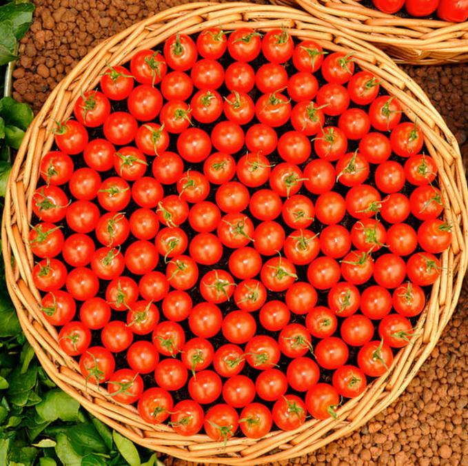 Memang sebuah tomat, tapi kalau ditata dan difoto dengan pencahayaan yang tepat, tomat ini menjadi lebih terlihat cantik.