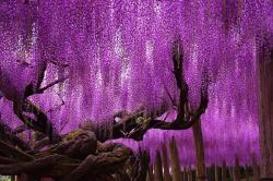 9 Pohon Indah di Dunia ini Bisa Membuat Hati Kamu Terasa Sejuk