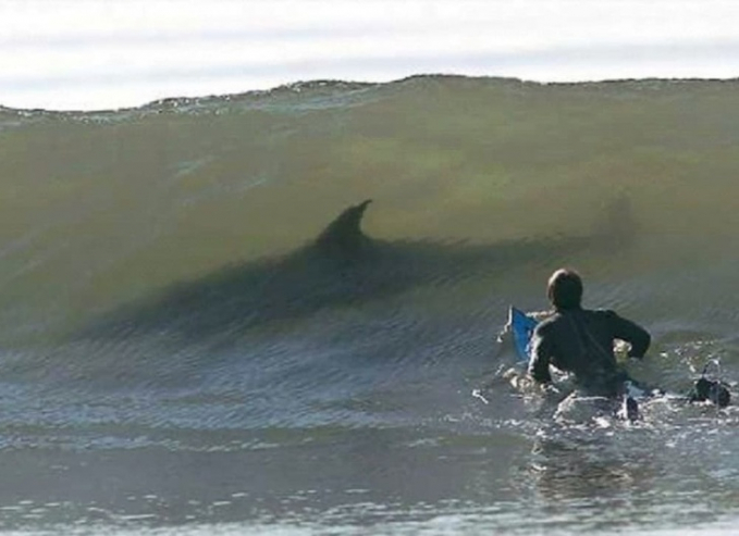 Lagi enak-enak mau selancar eh tiba-tiba si ikan hiu nongol gitu aja diantara ombak