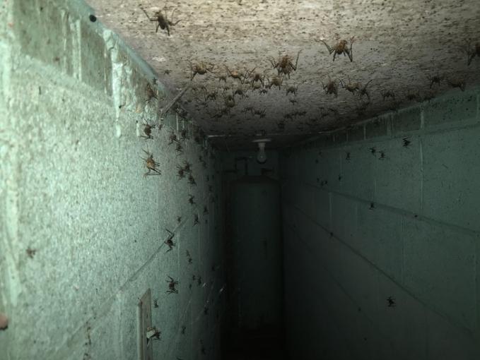 Salah satu sudut ruangan sempit tak terpakai sampai-sampai menjadi sarang binatang tuh gengs.