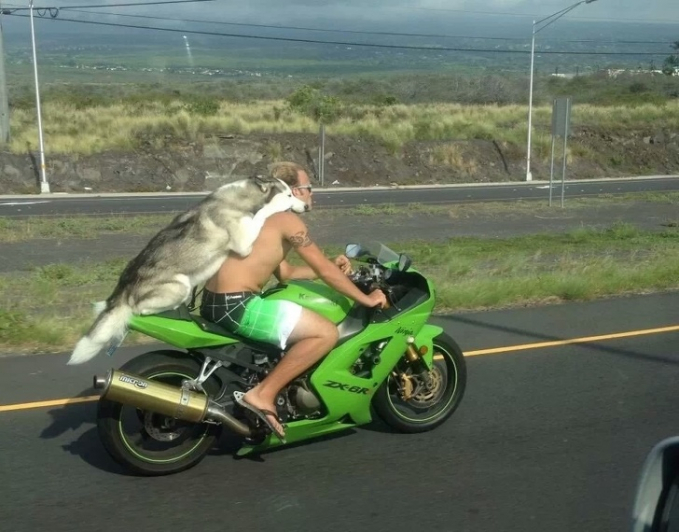 Ciee, yang nggak punya pacar jadi terpaksa deh bawa anjing peliharaan kemana-mana.