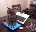 Kelucuan Kucing Peliharaan Dirumah yang Bikin Gemes