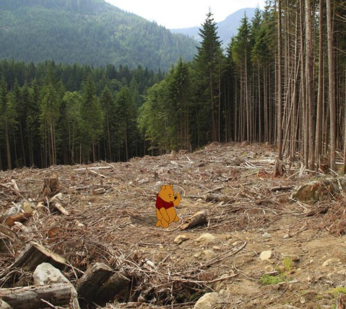 Dan si Pooh pun nggak bisa bermain dan memanjat pohon di hutan untuk mencari madu karena pohonnya ditebang dan hutan pun gundul.
