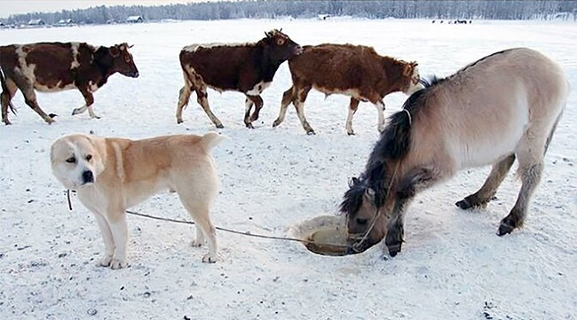 Ternyata nggak gampang memelihara keledai sob, mungkin itulah yang akan dikatakan oleh anjing ini.