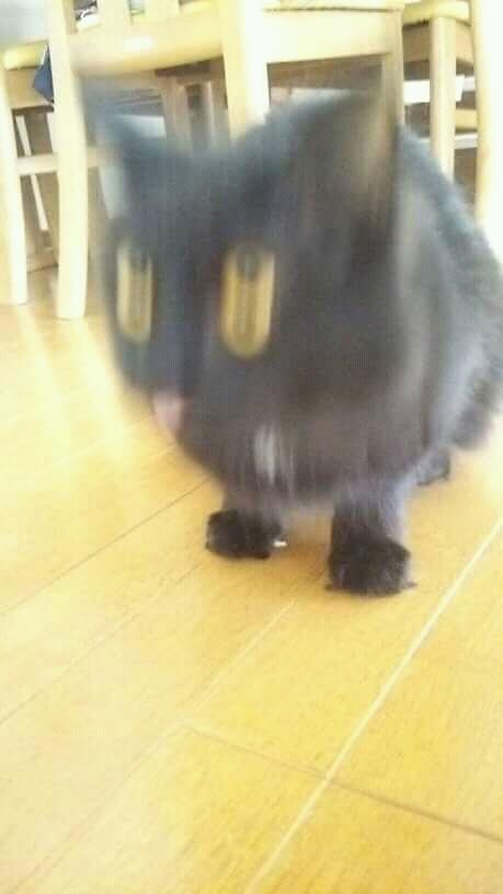Pasti kalian pada pusing kan ngeliat mata si kucing satu ini Pulsker?