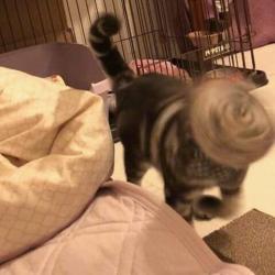 Nggak Terlihat Lucu, Foto Gagal Para Kucing Ini Justru Nampak Aneh