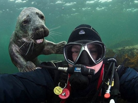 Maklum di dalam laut jarang ada yang motion jadi dia ikutan narsis.