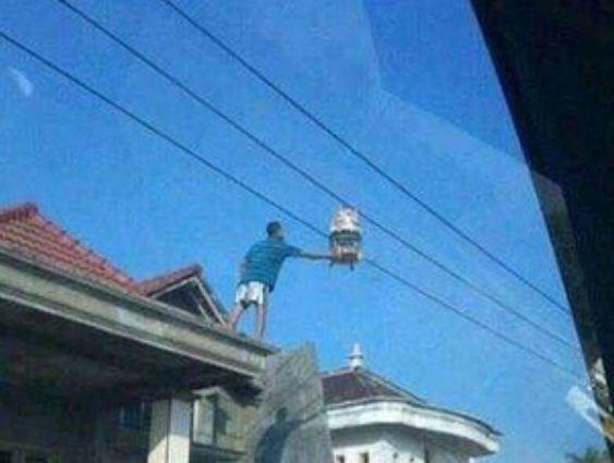 Wah, berani banget nih gengs si bapaknya nggak takut kesetrum jemur burung di kabel listrik bertegangan tinggi.