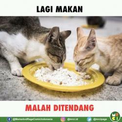 7 Meme Ini Gambarkan Betapa Tersiksanya Menjadi Seekor Kucing