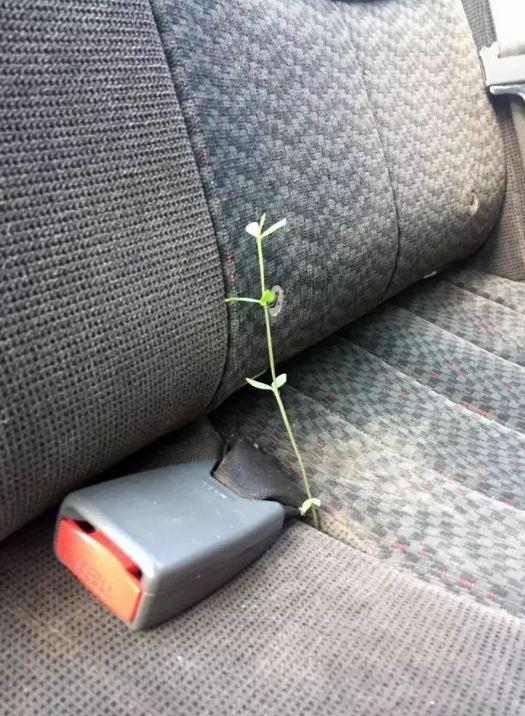 Wah sangking c8nta alam.tumbuh di mobilpun dibiarin aja.