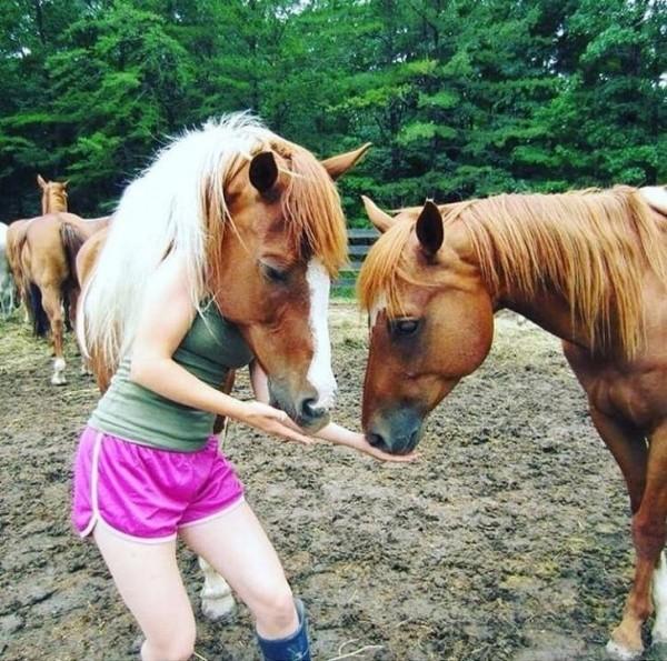 Saat kuda Betina dan kuda jantan bertemu.