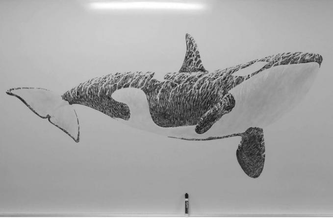 Bukan lukisan ikan hiu, melainkan hanya gambar yang dilukis dengan spidol hitam dan penghapus.