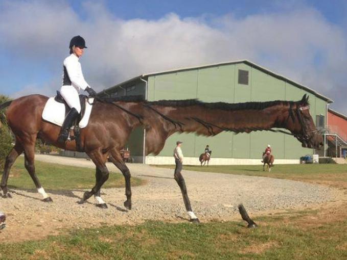 Si kudanya nampaknya akan berubah menjadi seekor jerapah nih Pulsker dengan lehernya yang panjang.