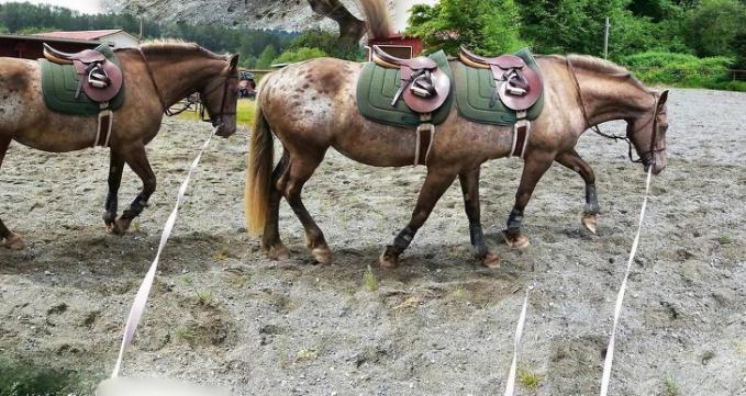 Yang ini malah kudanya memiliki kaki enam lho guys.