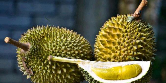 Durian Rajanya buah ini menjadi favorit orang Indonesia, tetapi nggak untuk beberapa bule yang nggak terbiasa dengan aroma menyengat dari buah ini, sehingga otomatis mereka nggak suka dengan buah ini.