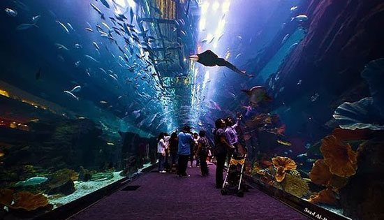 Aquarium Dubai dan Discovery Centre (Uni Emirat Arab) Mall terbesar di dunia, The Dubai Mall menjadi lokasi bagi aquarium terbesar dan terluas di Asia, Aquarium Dubai dan Discovery Centre. Memiliki tangki dan kapasitas air 2,64 juta galon air ini aquarium yang dibuka untuk umum sejak 4 November 2008 ini, menyimpan 33.000 hewan laut. Hebatnya lagi aquarium ini juga mempunyai panel akrilik terbesar di dunia, untuk menyaksikan berbagai jenis makhluk laut tersebut termasuk ikan hiu dan ikan pari
